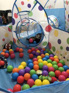 ferret-toy-ball-pool