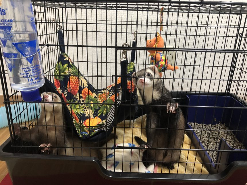 ferret-cage-catch