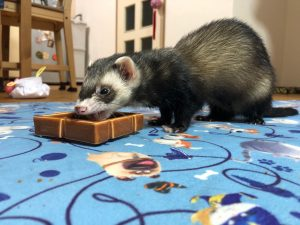 ferret-food-point