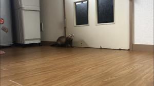 ferret-bond-waiting