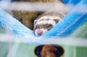 ferret-proofing-hammock